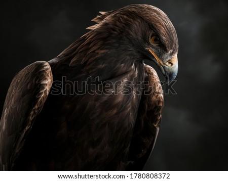 Portrait of the Golden Eagle  Stock photo ©