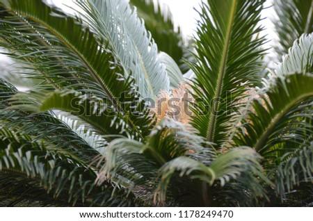 Portrait of the green fern plant #1178249470
