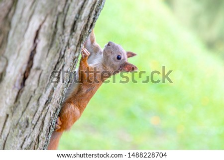Portrait of the playfull squirrel running a tree in extreme closeup #1488228704