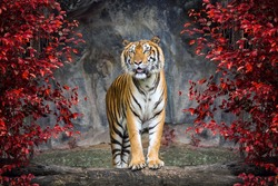 Portrait of the tiger.