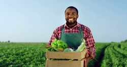 Portrait of the young African American happy and good looking male farmer standing in the green field during harvesting in summer and holding a box with mature vegetables.
