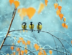 portrait of three cute birds Tits in the Park sitting on a branch among bright autumn foliage during a snowfall