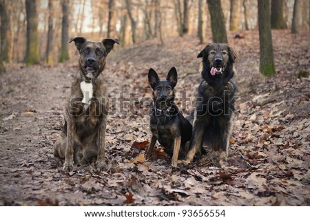 Portrait of three dogs in autumn colors
