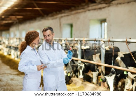 Portrait of two veterinarians wearing lab coats working at farm giving vaccine shots to cows, copy space