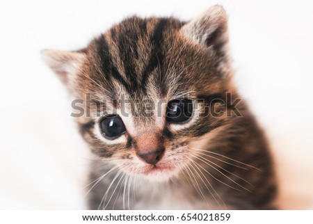 portrait of 3 weeks new born kitten 3 France