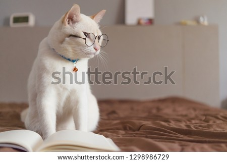 Portrait of White Cat wearing glasses and reading book,pet fashi