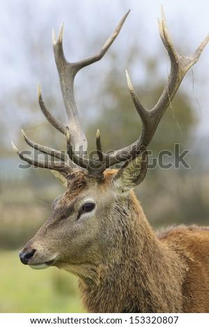 portrait of wild deer in forest  #153320807