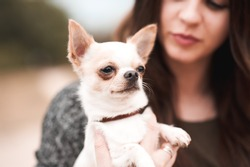 Portrait of woman holding chihuahua pet outdoors