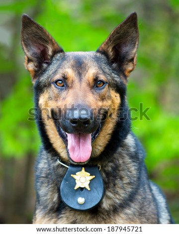 Portrait of working police dog