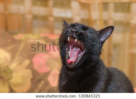 Portrait of yawning black cat with closed eyes.