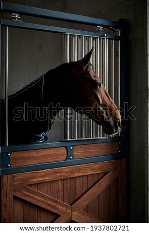 Portrait of young bay horse staying in a modern stable Photo stock ©
