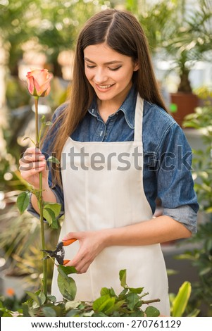 Portrait of young female florist  pruning rose in flowers shop.