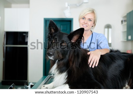 Portrait of young female veterinarian doctor with a dog at medical clinic