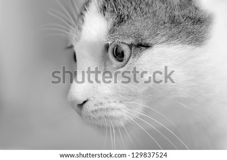portrait of young kitten - stock photo