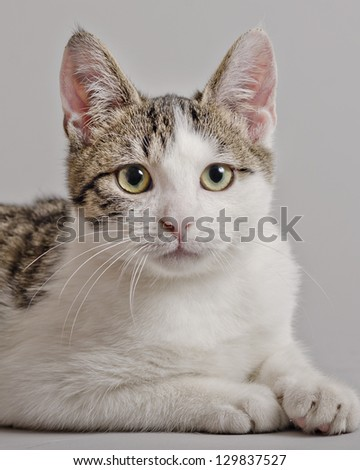 portrait of young kitten