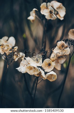 portrait photography of white flowers