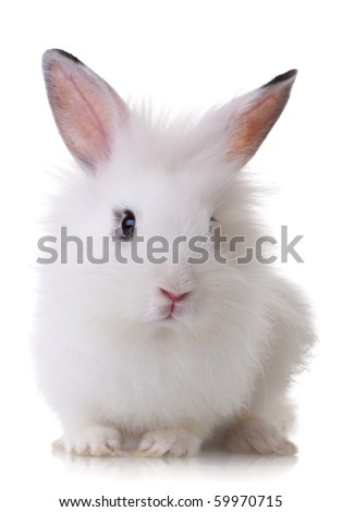 portrait picture of a white little rabbit looking at the camera