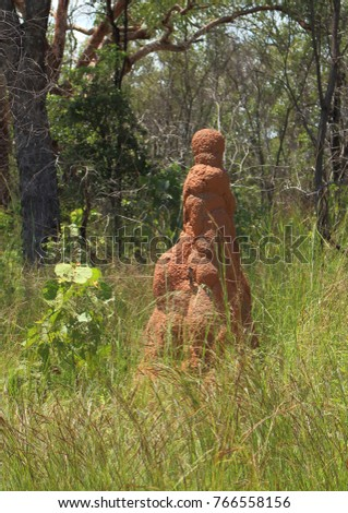 Portrait picture of large termite mound surrounded by grass in Northern Territory, Australia