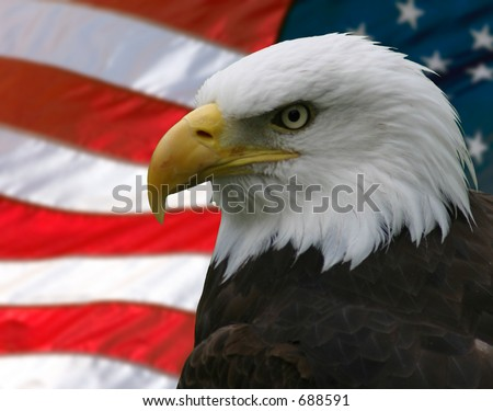 Portrait/Profile of a bald eagle, taken from the side, slightly off-centre; superimposed over the American flag.