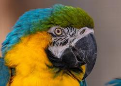 Portrait shot of a colorful ararauna
