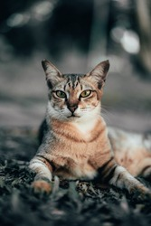 Portrait shot of a stray Tabby cat, which has a part of its right ear missing, sitting on grass in a park. The cat has a fierce expression, staring directly into the camera. Edited for dramatic colors