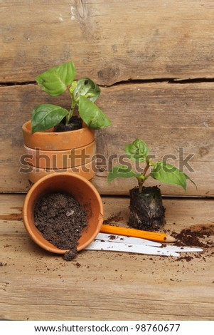 Portrait shot of seedling plug plants and terracotta pots a pencil and labels on a potting bench