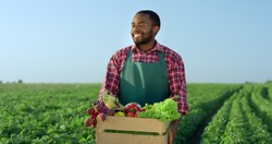 Portrait shot of the young African American handsome man farmer standing in the green field during harvesting and holding a box with mature vegetables.