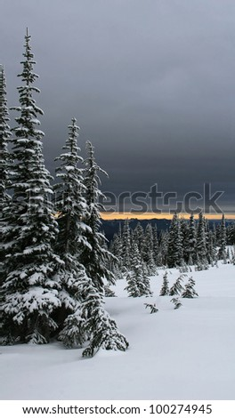 Portrait style photo showing snow,snow covered trees,and a very dark gray sky. Three large fir trees to the left frame side./ Mt Rainier Post Card View / Winter time wonder.
