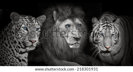Portrait tiger, lion, leopard isolated on black background #218301931