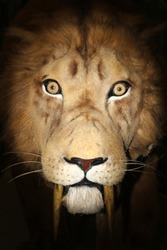 portrait tiger sabertooth
