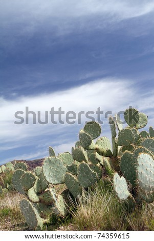 Portrait view of an Arizona landscape