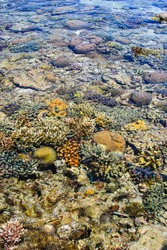 Portrait view of colorful coral reefs in shallow sea water, with ripples, glimmering lights and out of focus objects under water