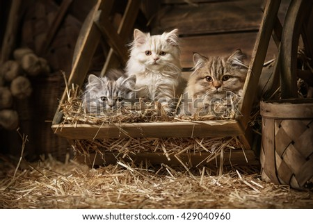 Portraits fluffy tabby kittens sleeping in an old barrel with a straw in the attic