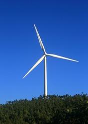 Portugal, Algarve. Wind power turbine raised above a dense eucalyptus forest, against a deep blue sky.