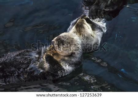 Portugal, sea otters