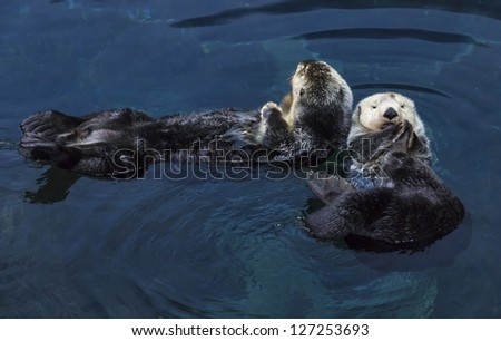 Portugal, sea otters