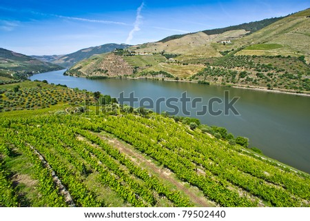 Portuguese port wine vineyards in Douro Valley, Portugal