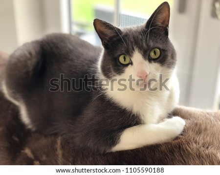 Posing domestic Cat Midna #1105590188