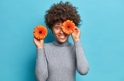 Positive dark skinned woman holds orange gerberas covers eye poses with favorite flowers dressed in casual grey turtleneck isolated over blue background. Female florist going to make bouquet