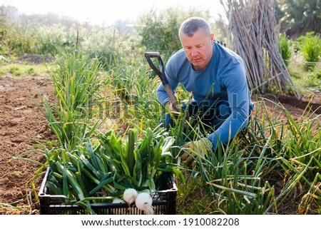 Positive man professional horticulturist with using mattock picking harvest of green onion Stock photo ©