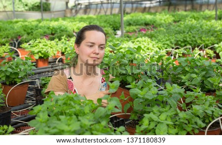 Positive woman gardener working in hothouse cultivating organic mint #1371180839