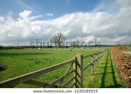 Post and rail fencing around a paddock with sheep