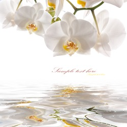 postcard. white orchids on the water
