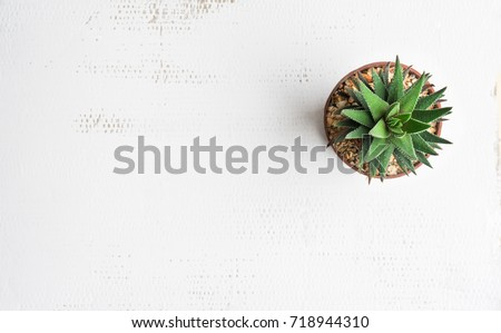 Pot cactus on white background Texture #718944310