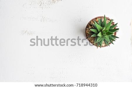 pot cactus on white background...