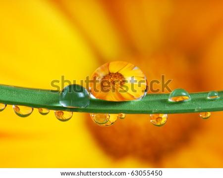 pot marigold flower mirroring inside rain drops