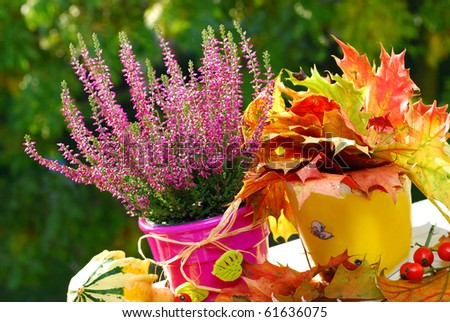 pot of pink  heather flowers and colorful leaves  in autumn garden