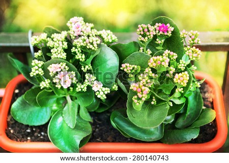 pot plant with flowers in flower box as an outdoor decoration of restaurant