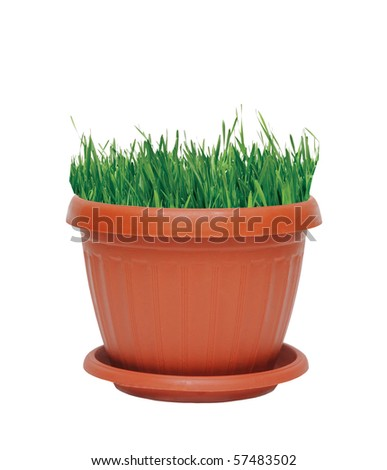 pot with grass isolated on white