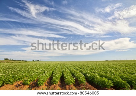 Potato Field in rural Prince Edward Island, Canada